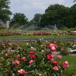 formal lawns from the rose garden