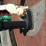 Doggie drinking fountain in front of Town Hall
