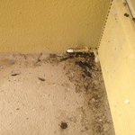 Roaches inside and outside balcony with birds' feces