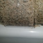 Shower - Black mold