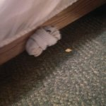 socks under the bed skirt
