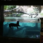 giant otter exhibit