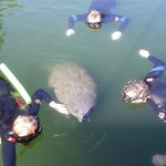 Foto de Manatees In Paradise - Private Tour