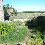 Photo de Entre Vigne et Garrigue