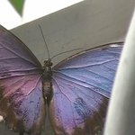 Butterfly in Conservatory