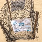 Protected Turtle eggs on the beach
