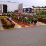 Amazing selection of flowers and plants