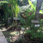 Serenity Eco Guesthouse and Yoga, Canggu Bali Foto