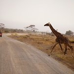 Photo of Africa Vision Safaris Tours - Private Day Tour