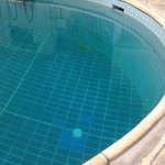 swimming pool green algae