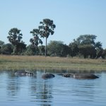 Hippo in the river as seen from the boat