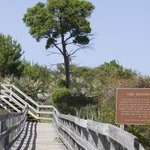 Boardwalk to Observation Tower