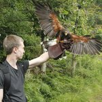 Killarney Falconry Foto