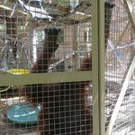 another orangutan at the bottom of cage
