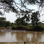 Hoppo Pool (in the Mara river !)- View from lobby and d