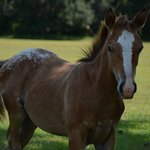 Foal on front yard