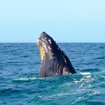 Foto Brier Island Lodge & Welcome Aboard Whale Watching Tours