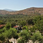 View from back room (olive groves, oleander)