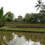 Photo of Prana Dewi Mountain Resort