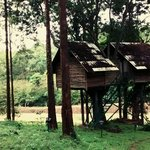 The Tree house at Gorukana