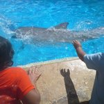Bild från Fairfield Inn & Suites San Antonio SeaWorld/Westover Hills