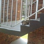 Groundhog on steps