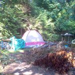 this is from another campsite montague park, galiano island