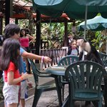 Monkeys are a common sight at breakfast