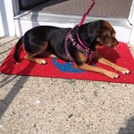 Our dog loving the front door and sun.