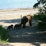 Mom with cubs