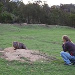So close to the wombat!