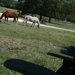 Bilde fra Hill Country Equestrian Lodge