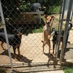 Volunteering at the Vieques Humane Society