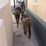 Port to Fira donkeys going home at the end of the day