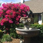 A fountain and bougainvillea in front.