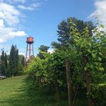 Vineyards and water tower at Edgefield