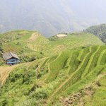 The rice paddys were green with growth when we visited Li An Lodge.