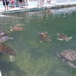 Pool where you can feed the turtles