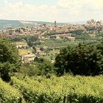 View from adjoining field of Orvieto