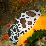 Utina Diving College Limited Foto