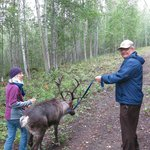 Running Reindeer Ranch Foto