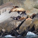 Sea lions doing what they do best