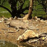 Foto de Crocodylus Village