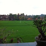 The view over a rice field
