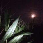 Navigating the giant maze by moon and torch light is very challenging (but great fun)