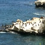 Cliffs with sea lions