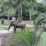 Foto Elephant Safari Park & Lodge