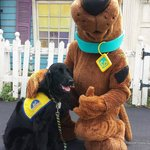 """""""Poet, future Service Dog, here.  Meet my friend Scooby at Six Flags!"""""""