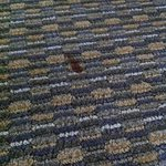 Stain on the carpet, room 228