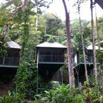 Photo of Daintree Eco Lodge & Spa